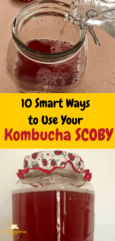 10 smart ways to ise your kombicha SCOBY