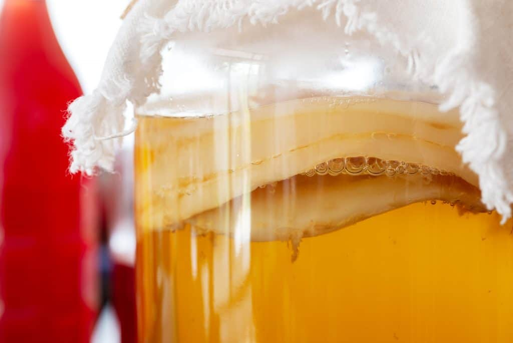 See Where You Can Buy the Best Kombucha SCOBY