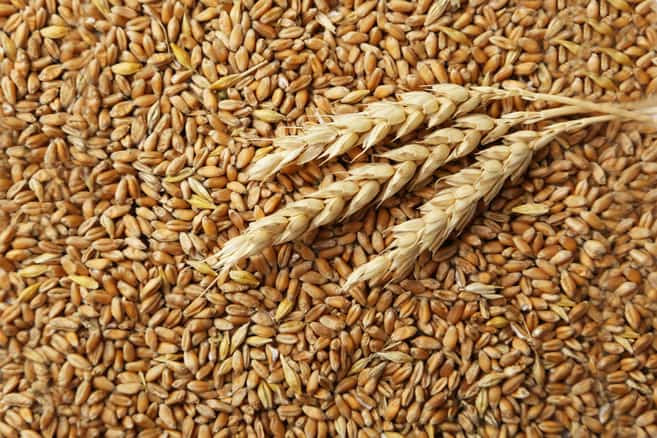 The 10 Best Grain Mills for Your Kitchen